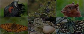 The Living Organisms - Characteristics and Habitats