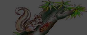 The Squirrel (Poem)
