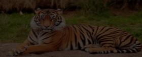 India: Climate, Vegetation and Wildlife